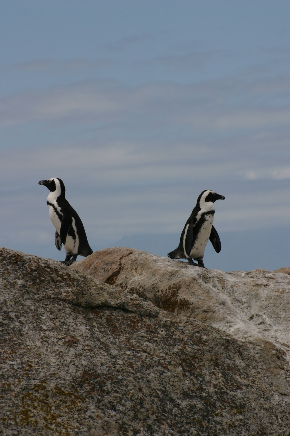 two penguins standing on rock