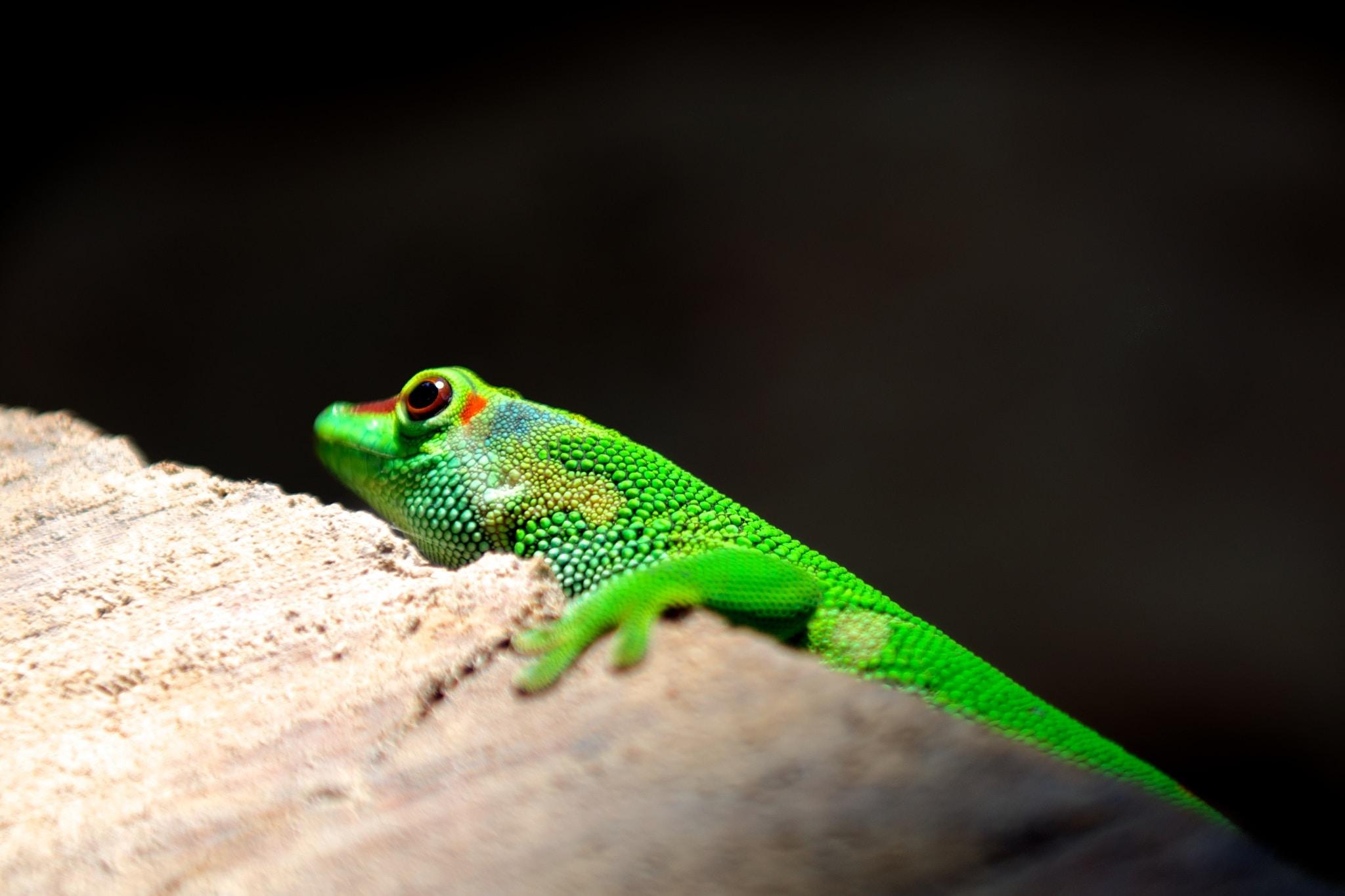 selective focus photography of lizard