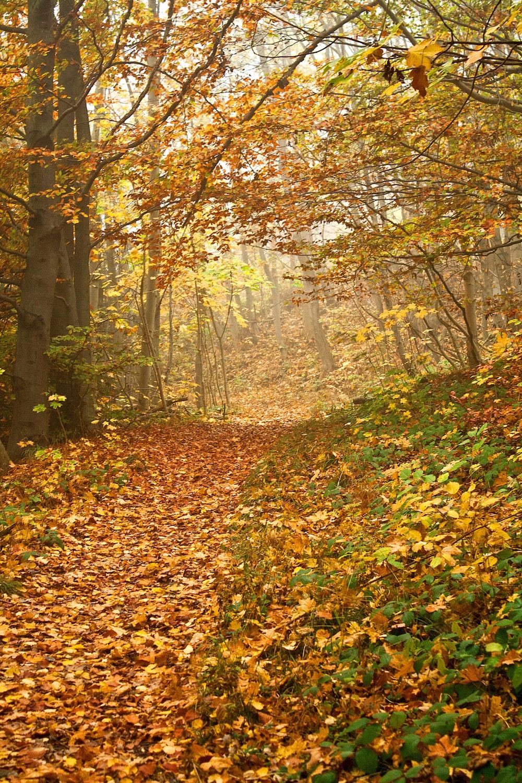 autumn leafed trees