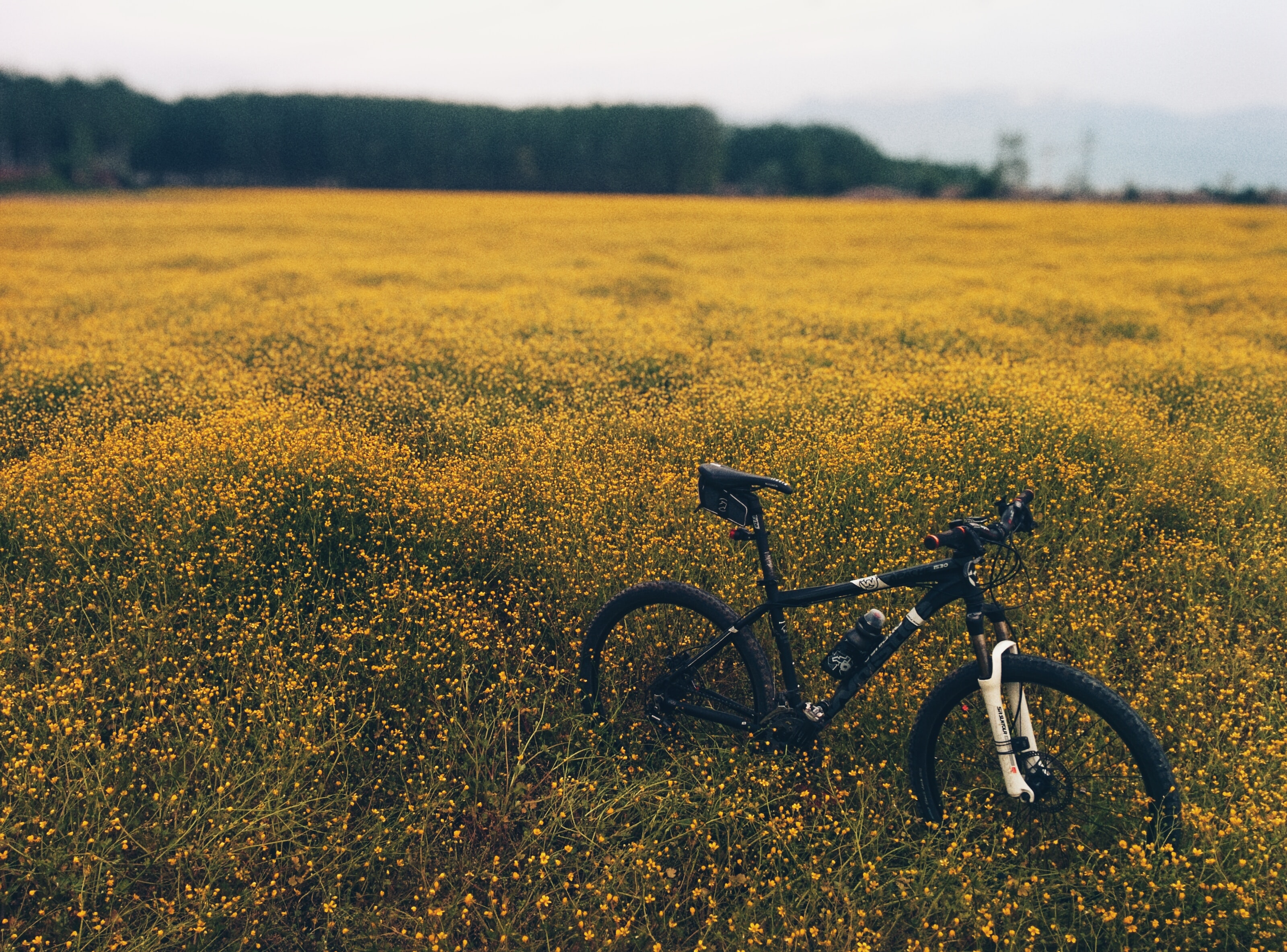 A mountain bike in the middle of a green and yellow meadow