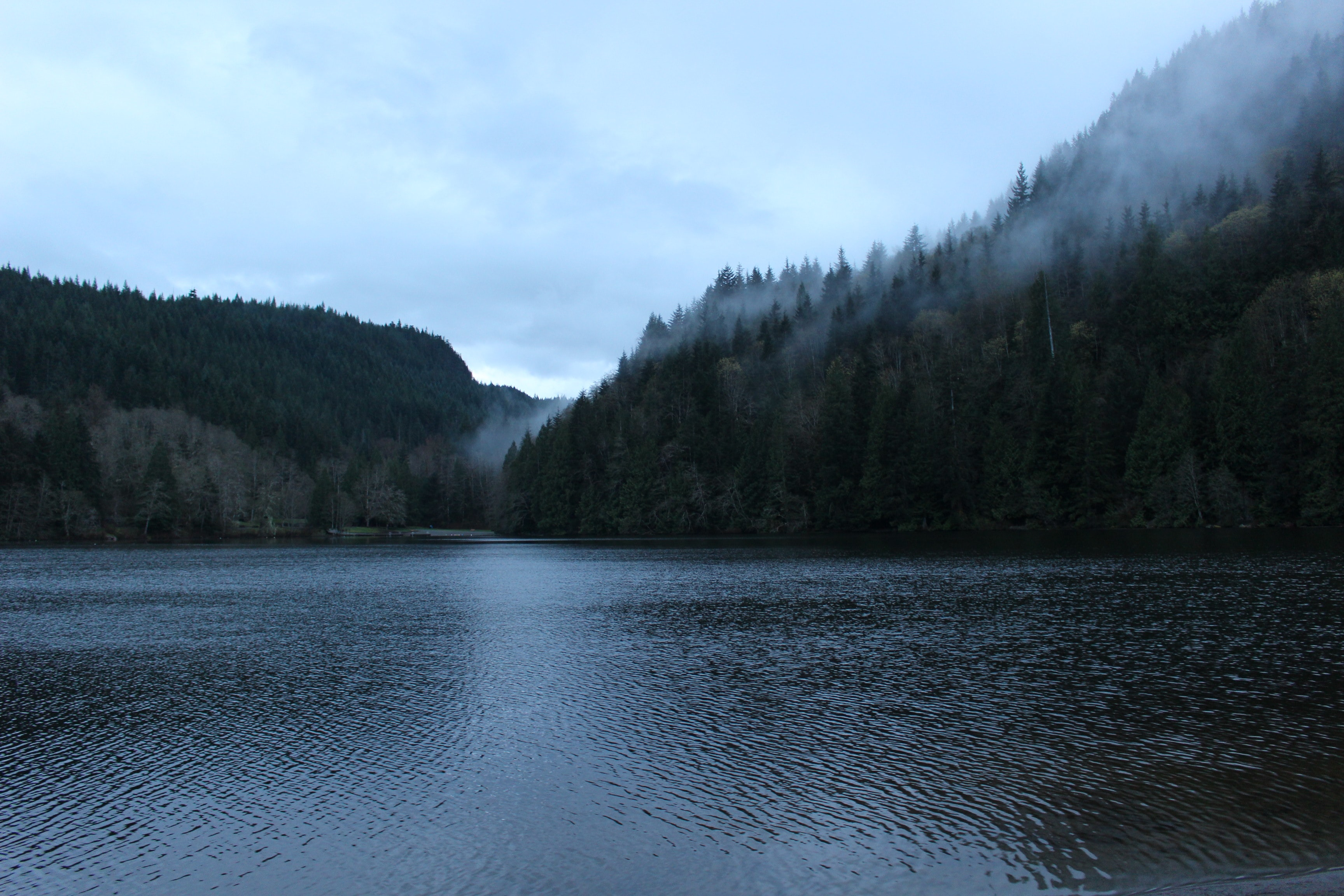 Choppy surface of a lake near woody shored enveloped with a patchy fog