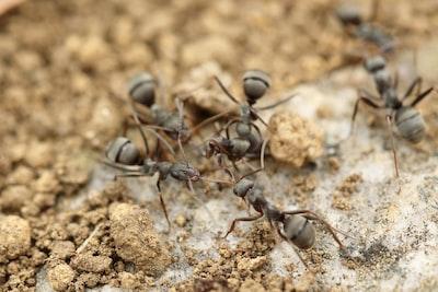 ants-sandy-ground