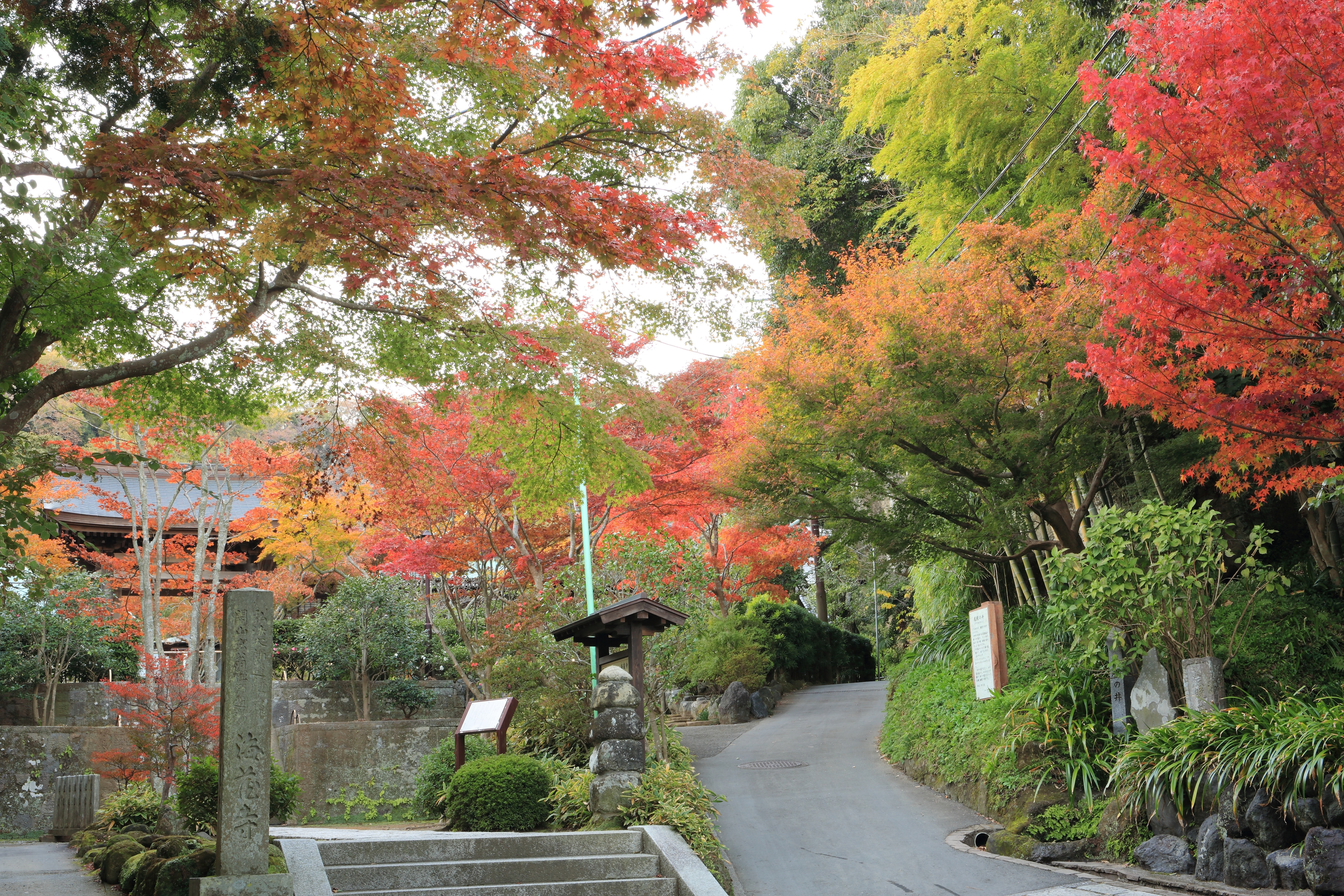 A beautiful garden walkway surrounded by green, pink and orange tree leaves.