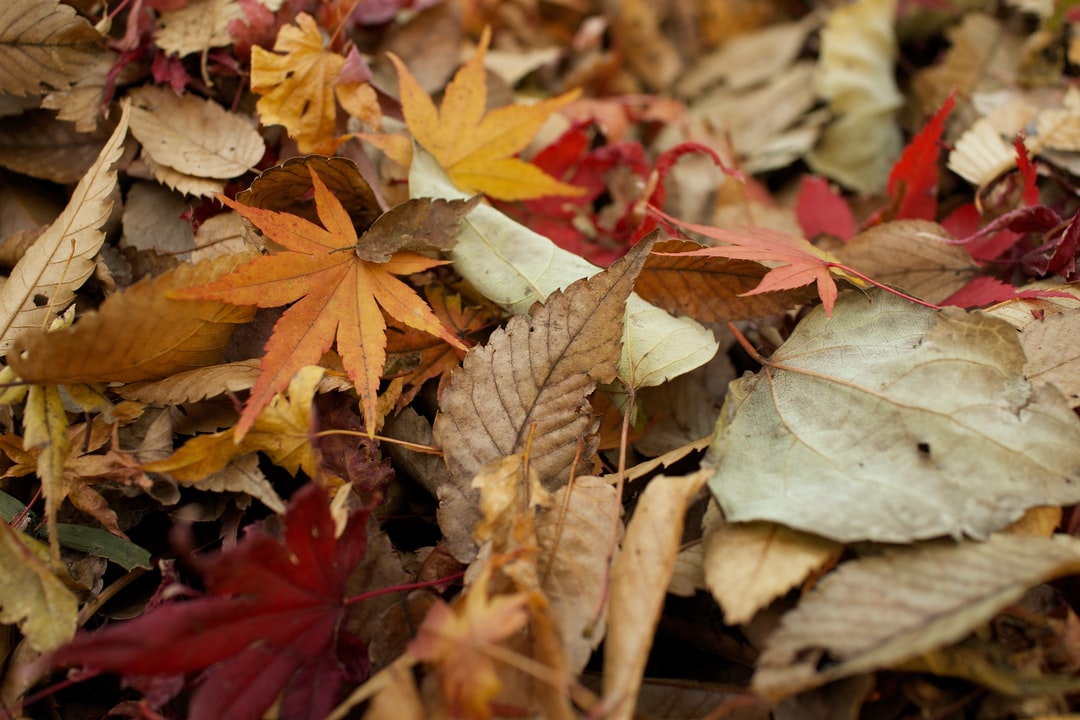 Diverse autumn leaves