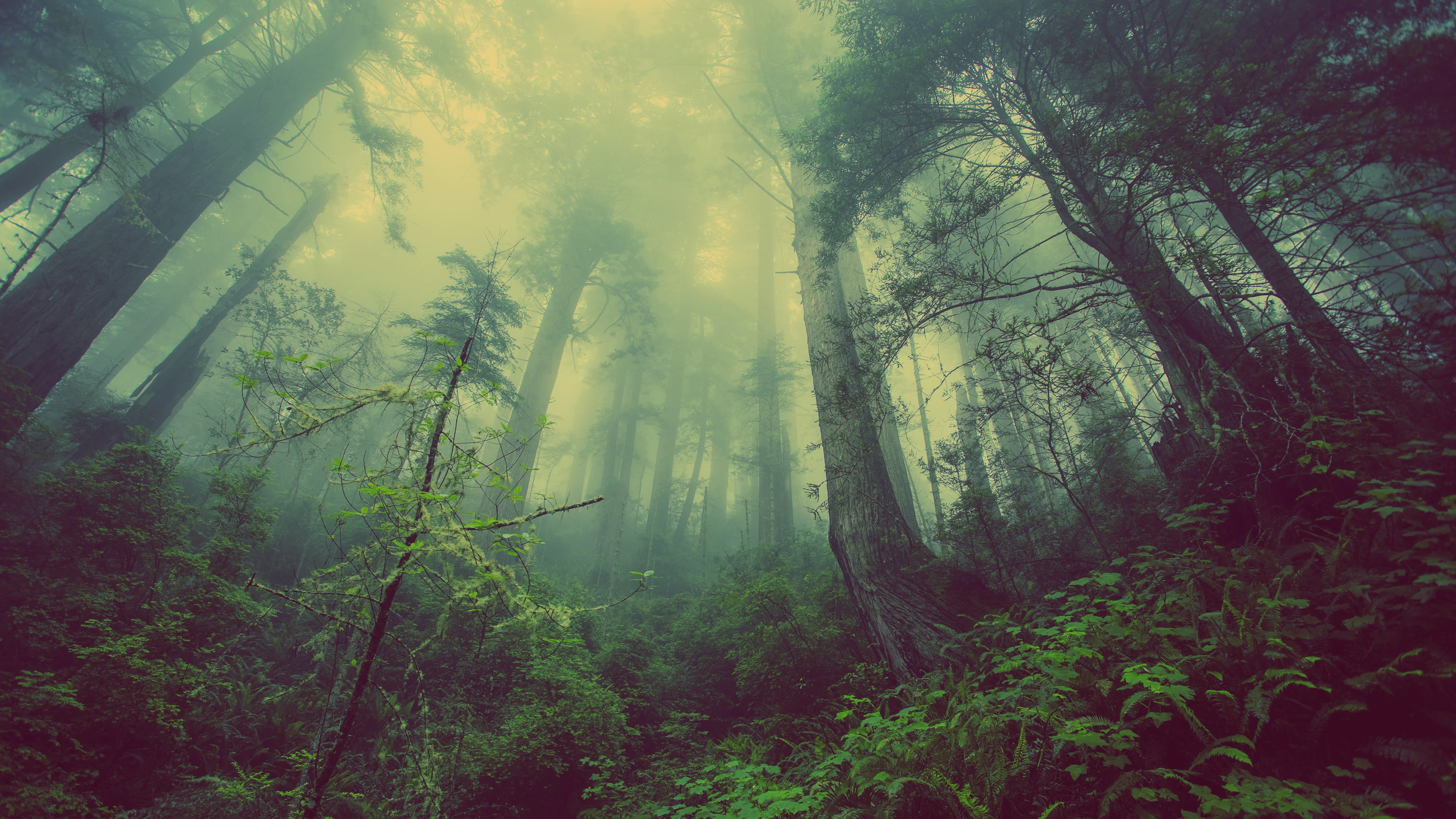 A low-angle shot of a foggy forest