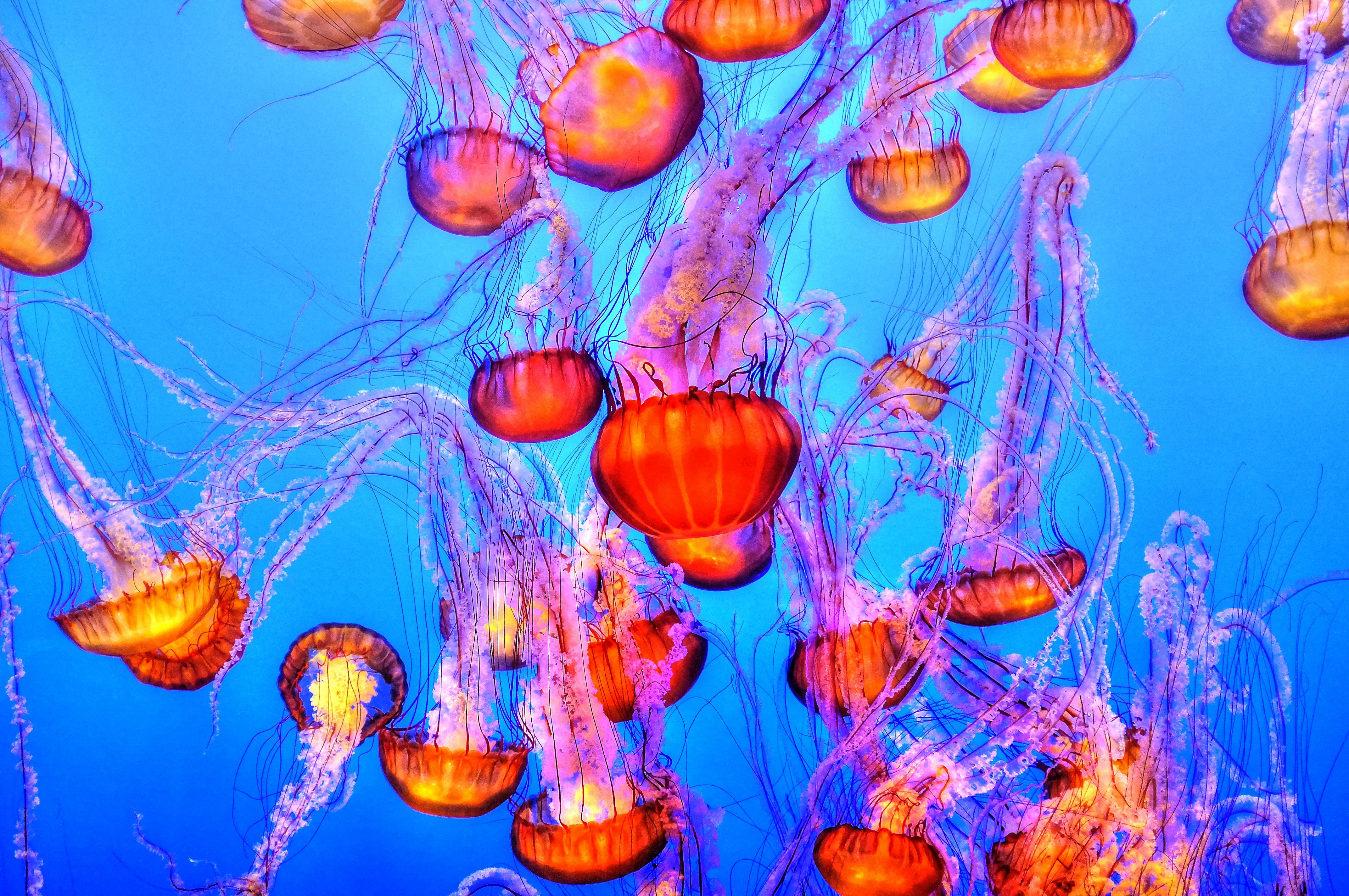 orange jelly fishes