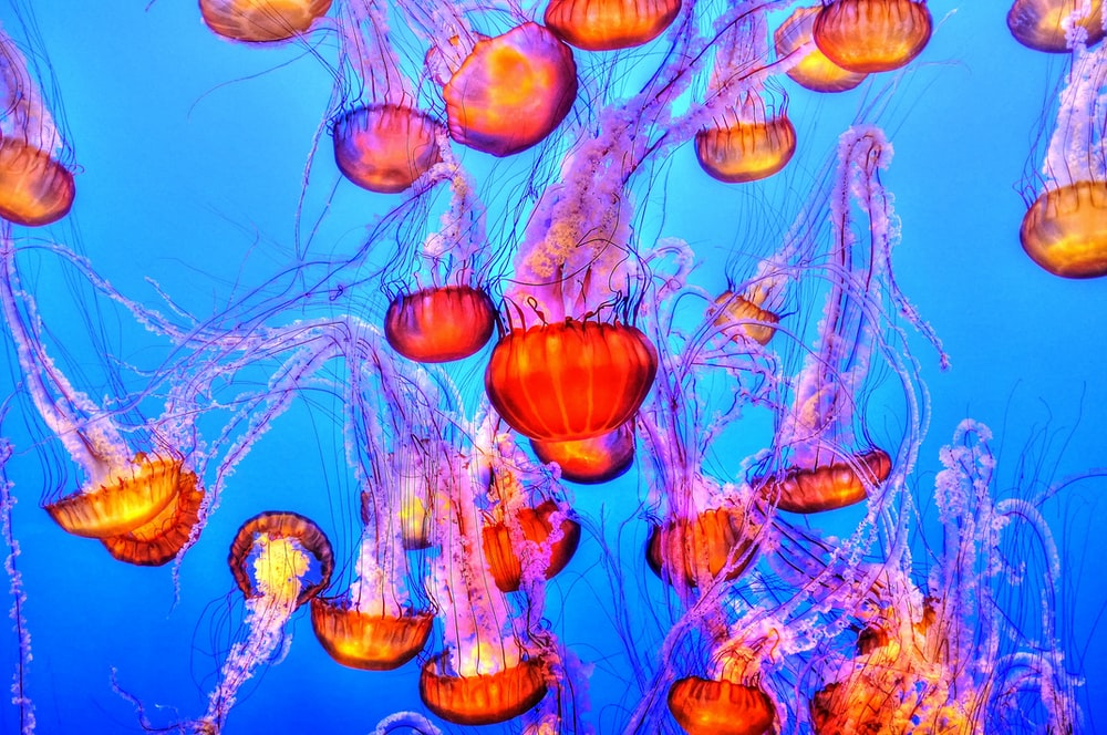 Jellyfish Underwater Wallpaper And Cool Wallpapers HD Photo By Francis Taylor Franc Ist On Unsplash