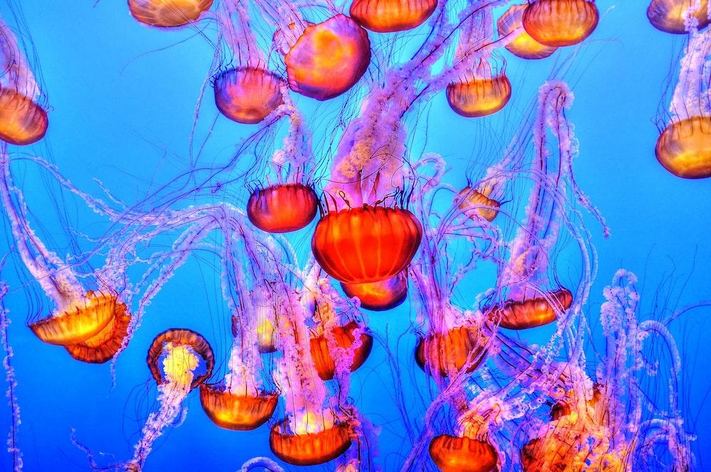 orange jelly fishes