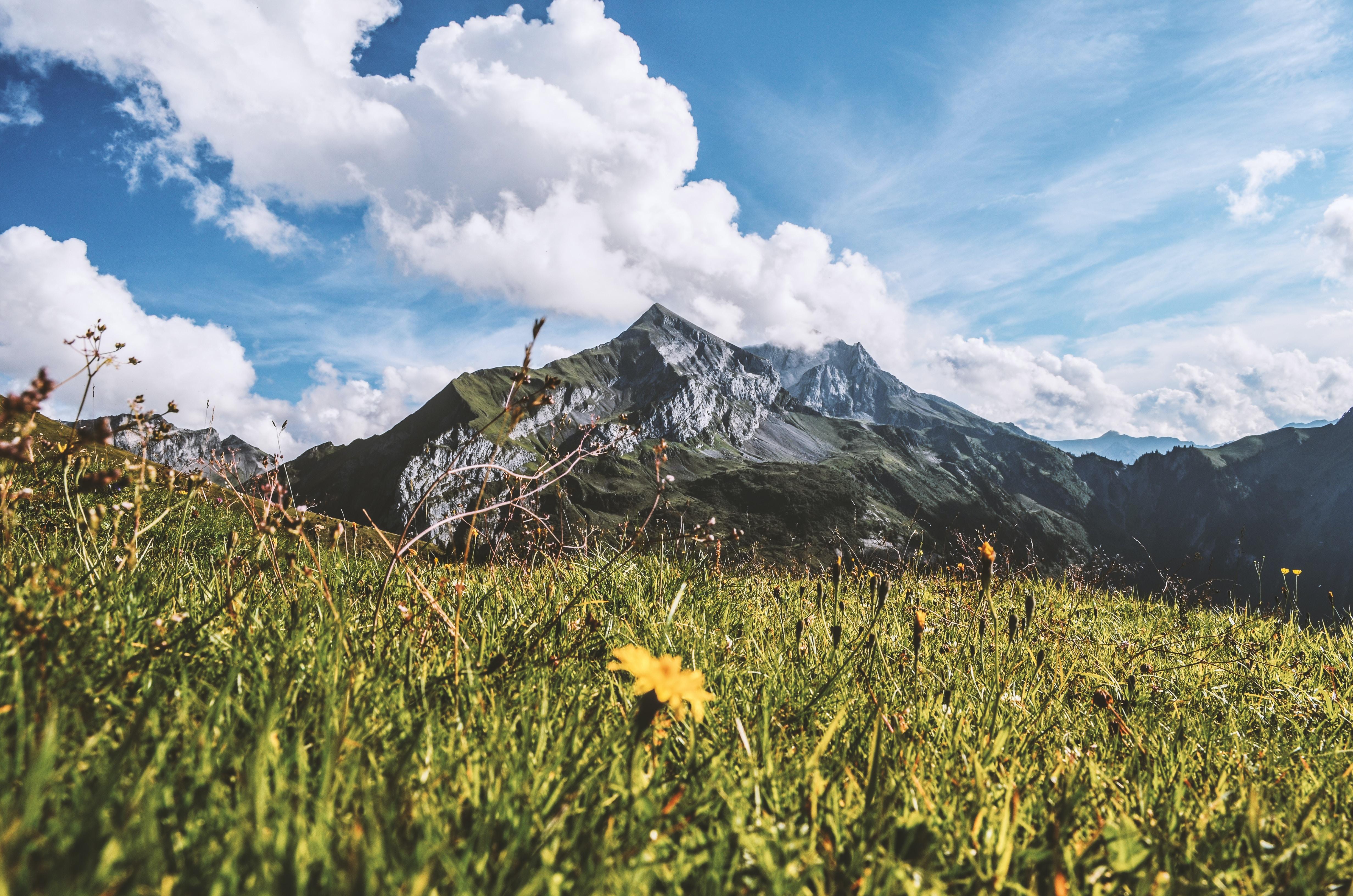green grass field infront of mountain
