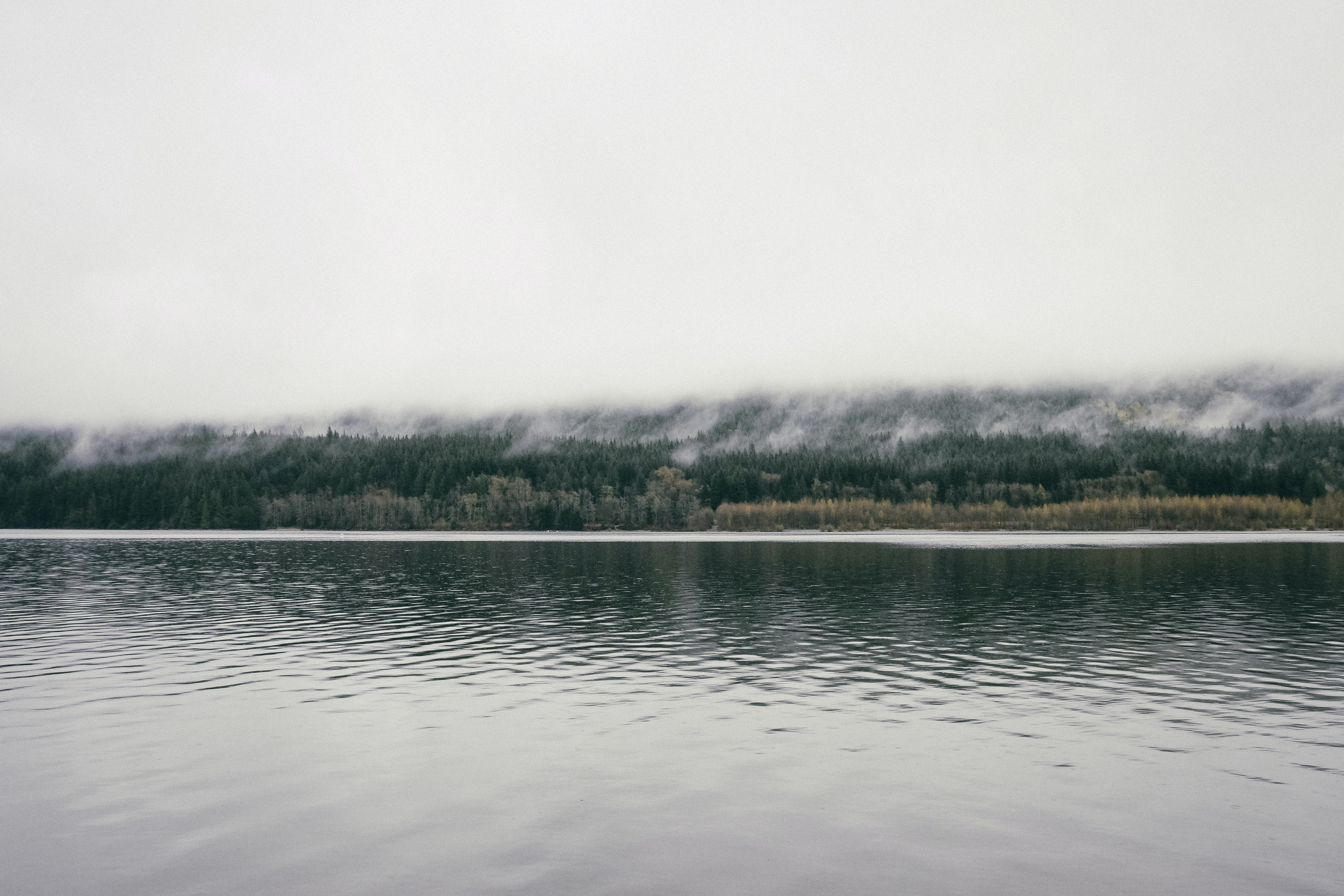A view of a lake and an evergreen forest enveloped in a dense fog on the other side