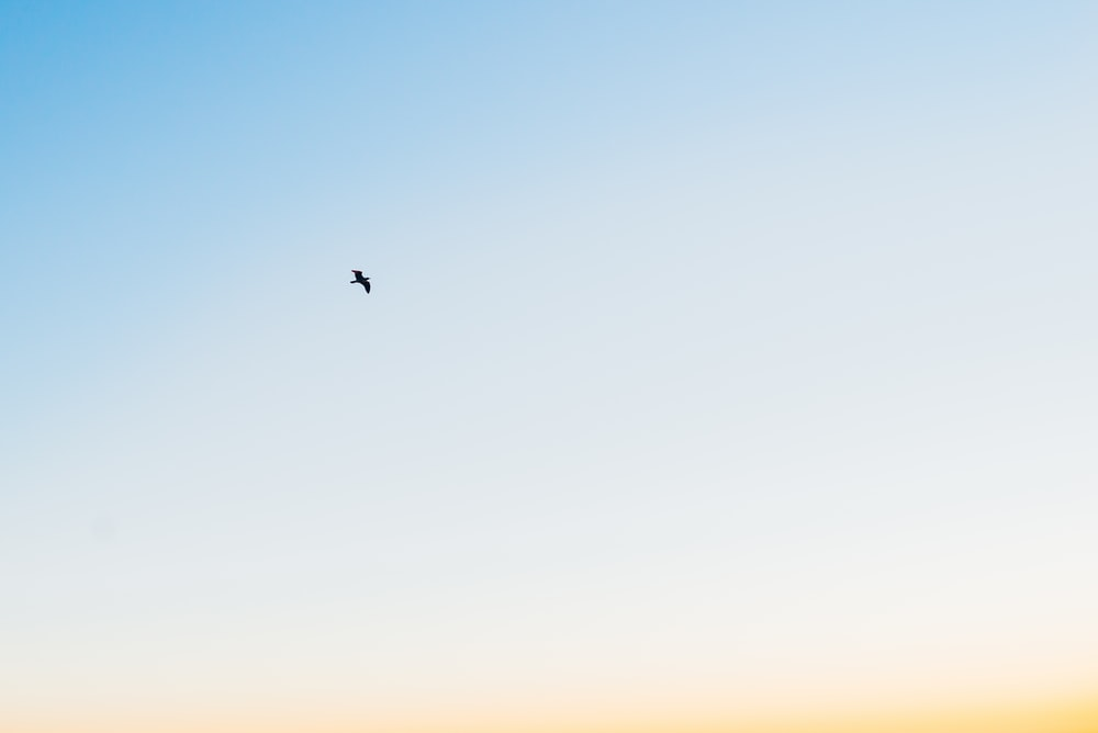 A bird flying in the sky.