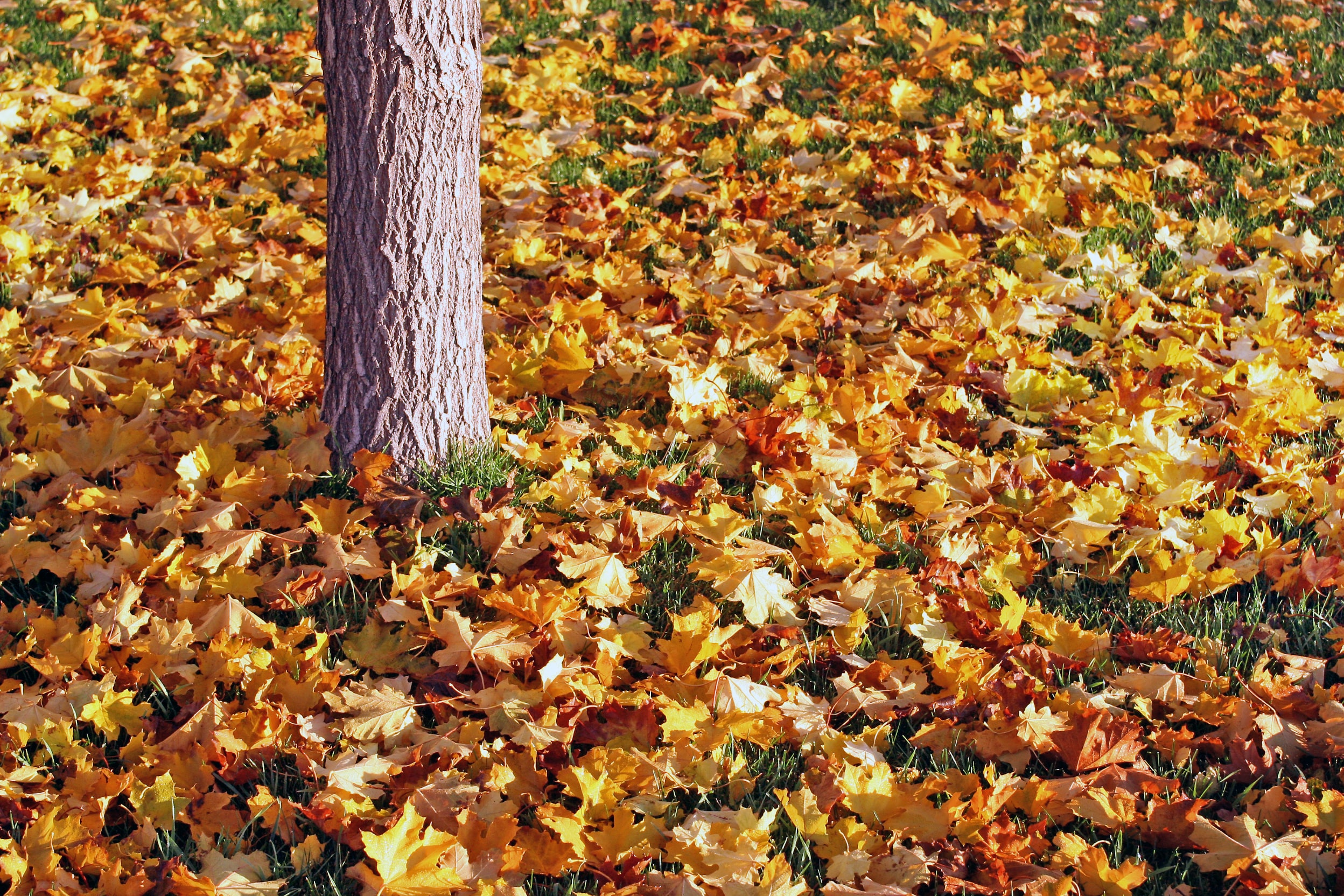 Fall leaves on the ground next to a tree stump on English ranch