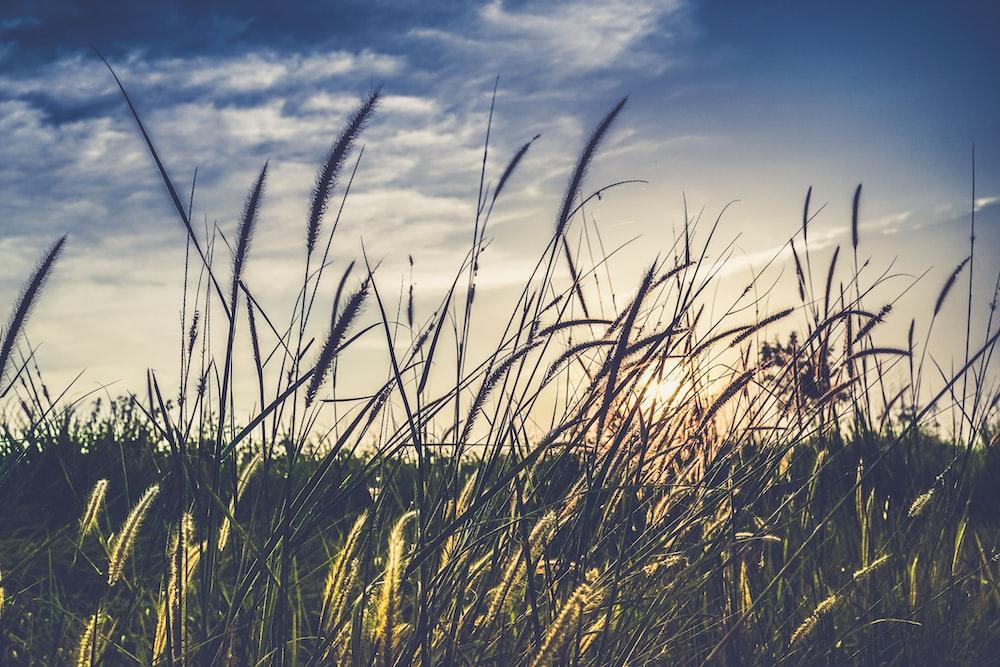 landscape photography of green grass field