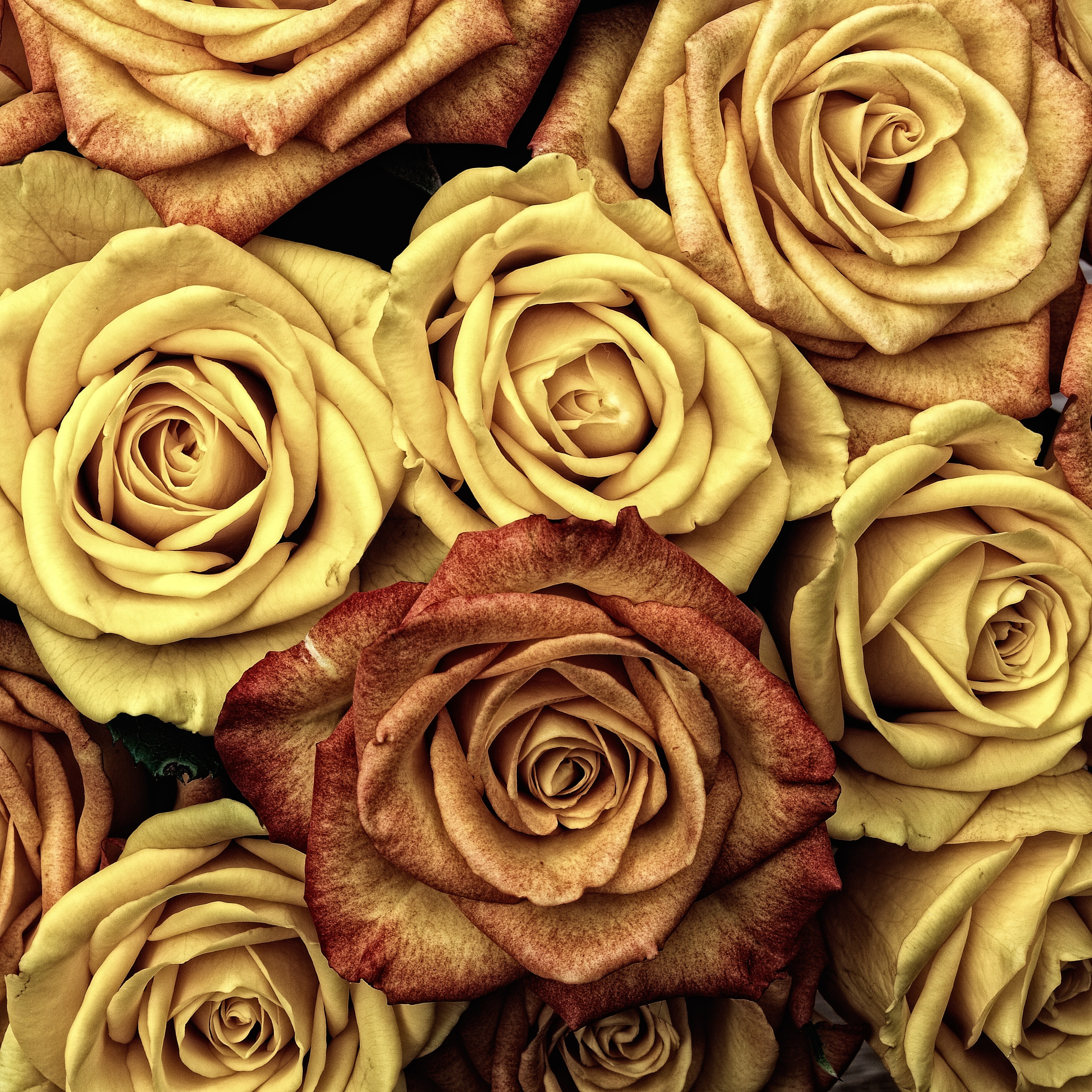 An overhead shot of an arrangement of roses