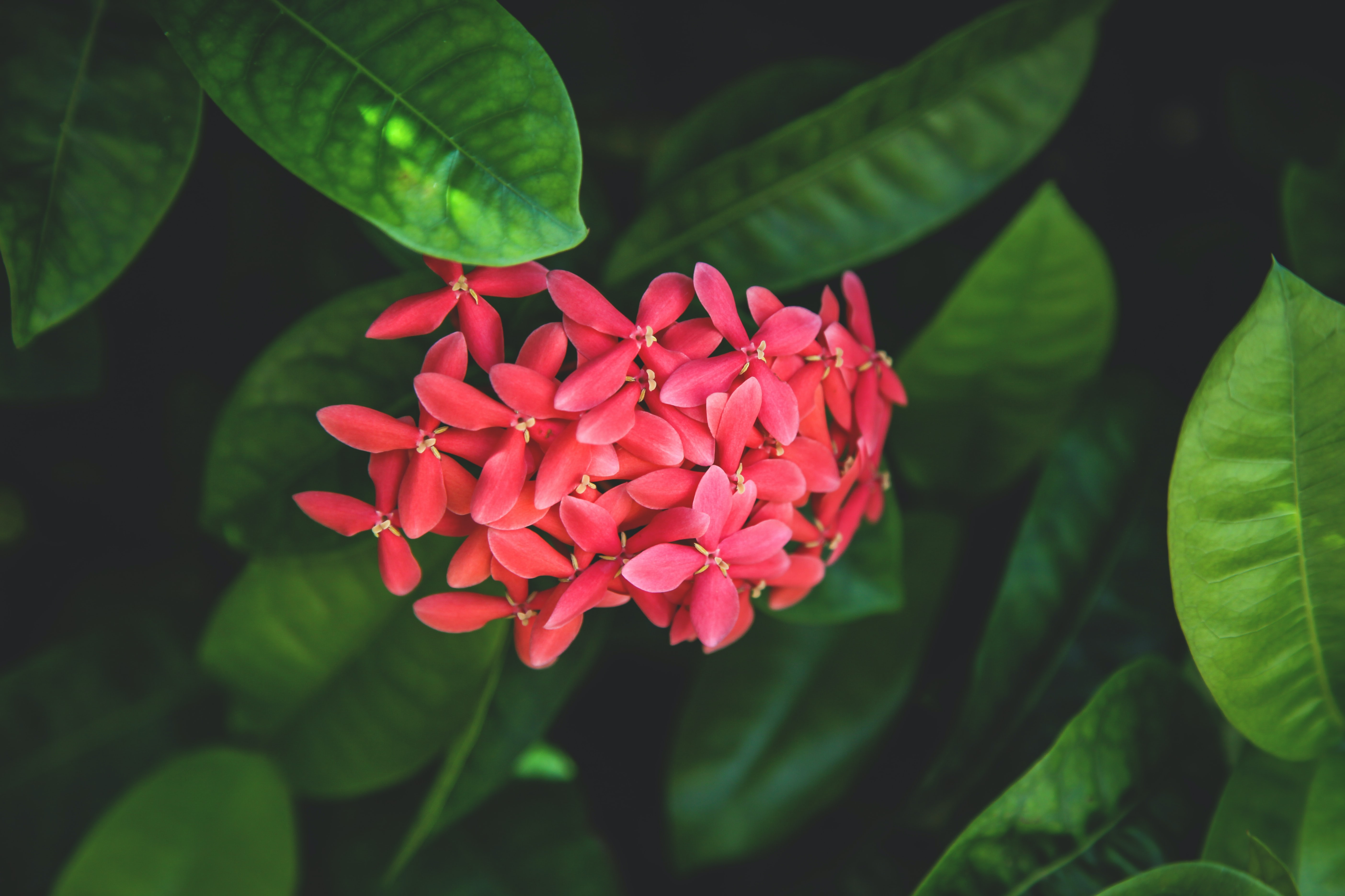 closeup photography of red petaled flowers
