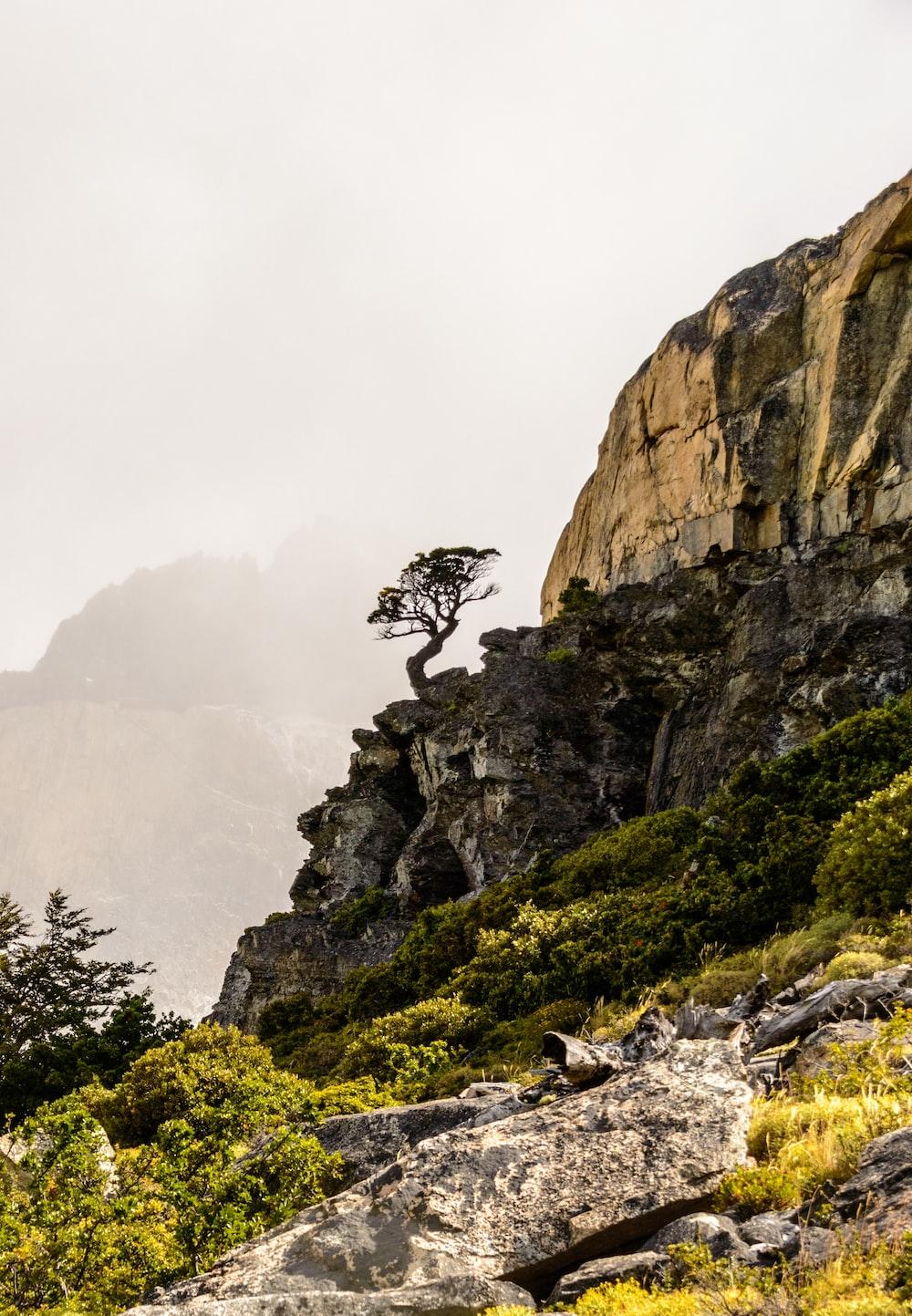 tree on cliff