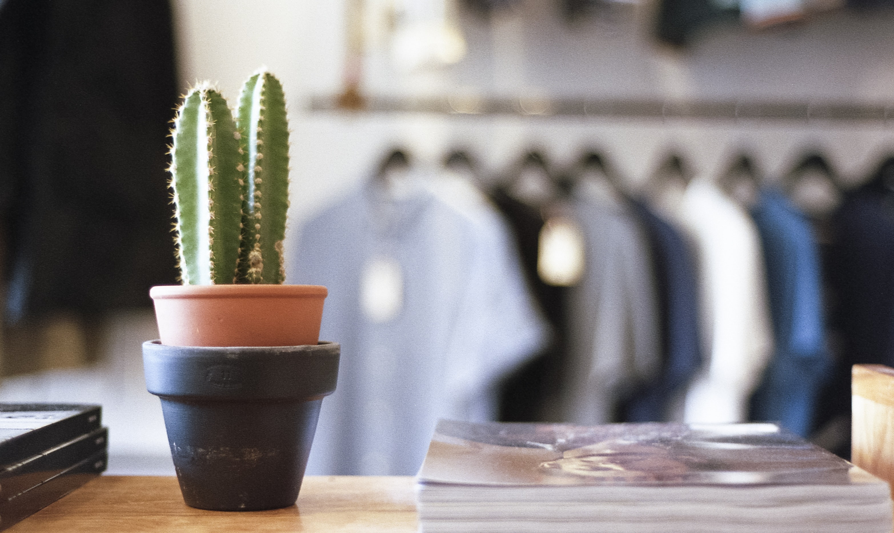 A cactus in a pot next to a pile of magazines in a clothes store