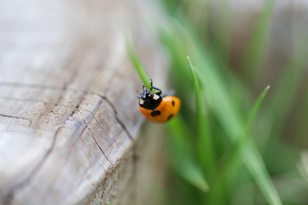 closeup photo of ladybug