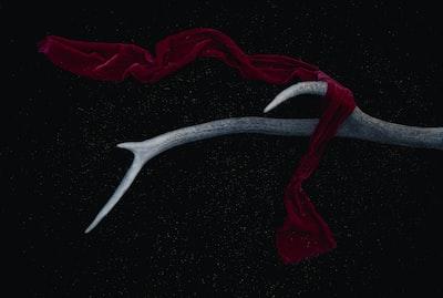 red scarf on antler surrealism zoom background