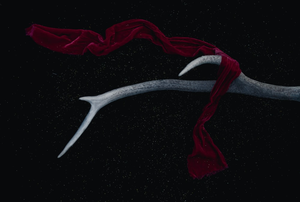 red scarf on antler