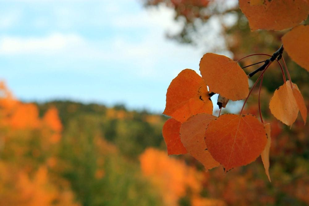 orange leaves in tilt shift lens