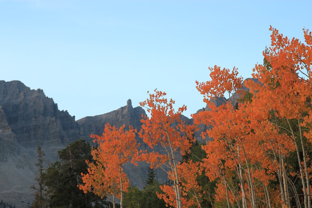 brown trees on mountain during daytime