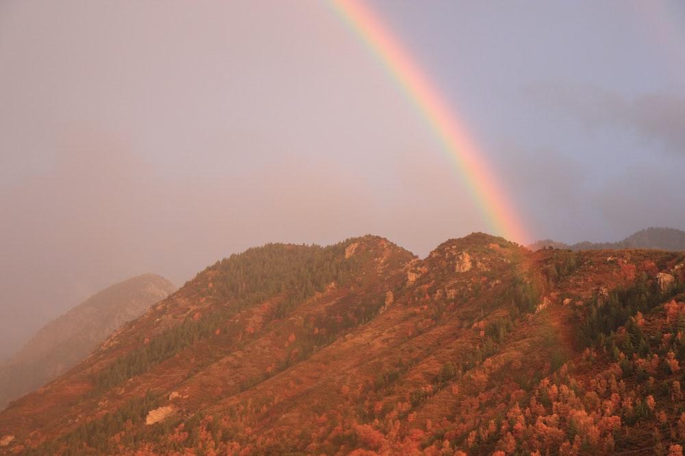 green trees on mountain under rainbow