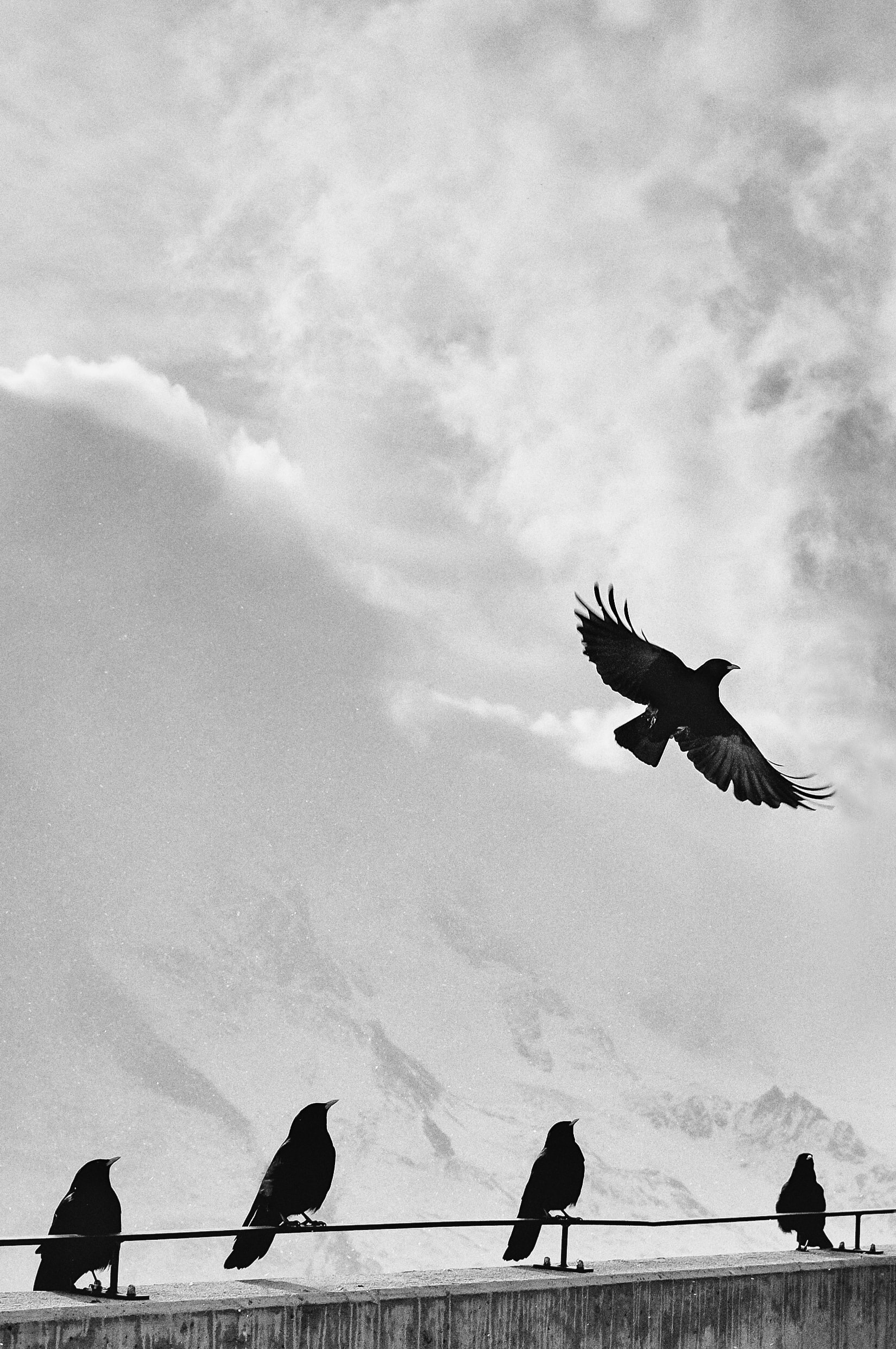 grayscale photo of birds