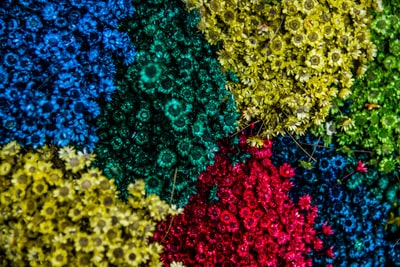 aerial shot of assorted-color blooming flowers