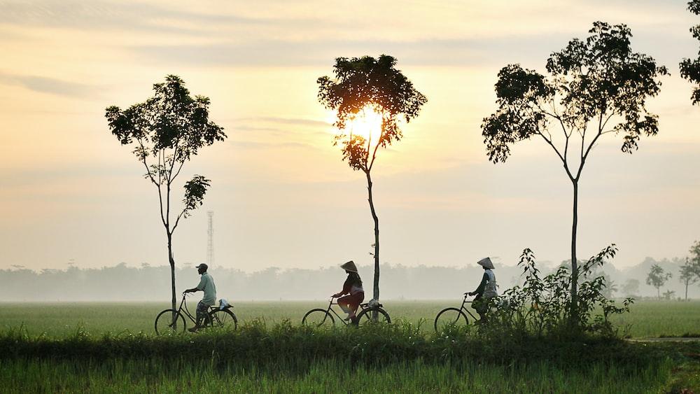 three person riding bikes on green grass field