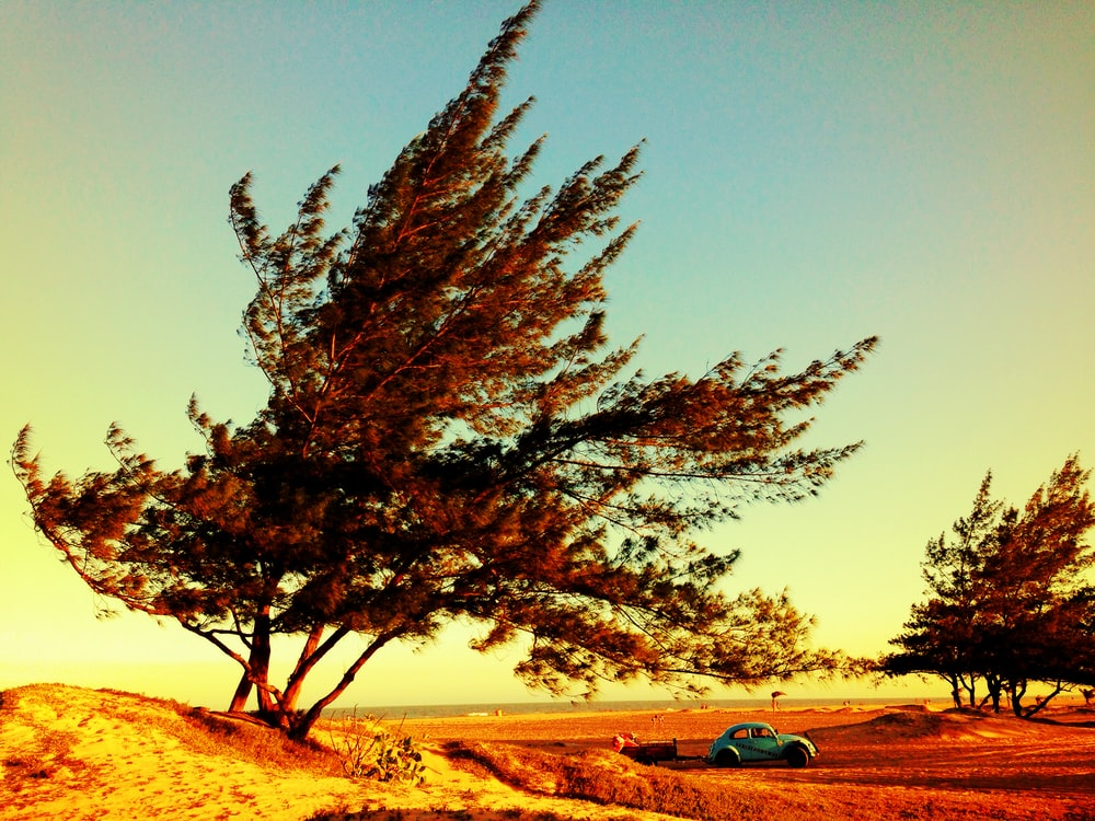 blue Volkswagen beetle near the tree