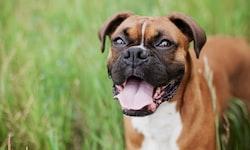 Pet Parent Sharon Hodge Brings Pet Wants to Broomfield, Colorado