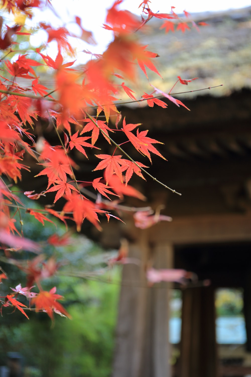 shallow focus photo of red leaves