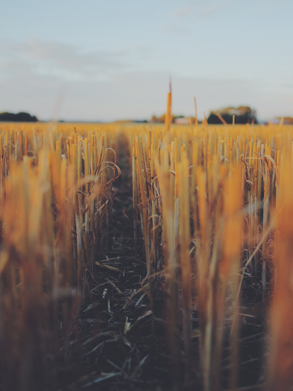 shallow focus photography of brown grass field