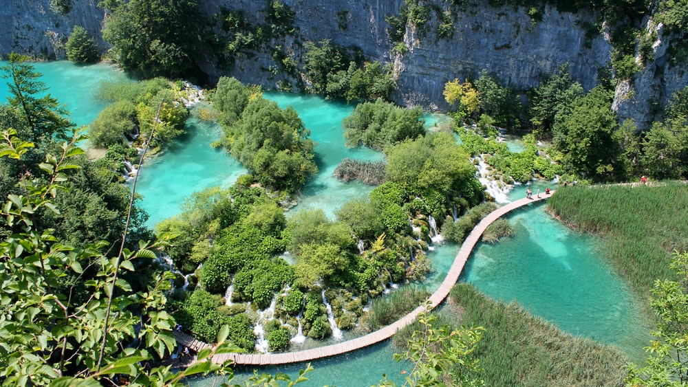aerial photography of green forest near body of water