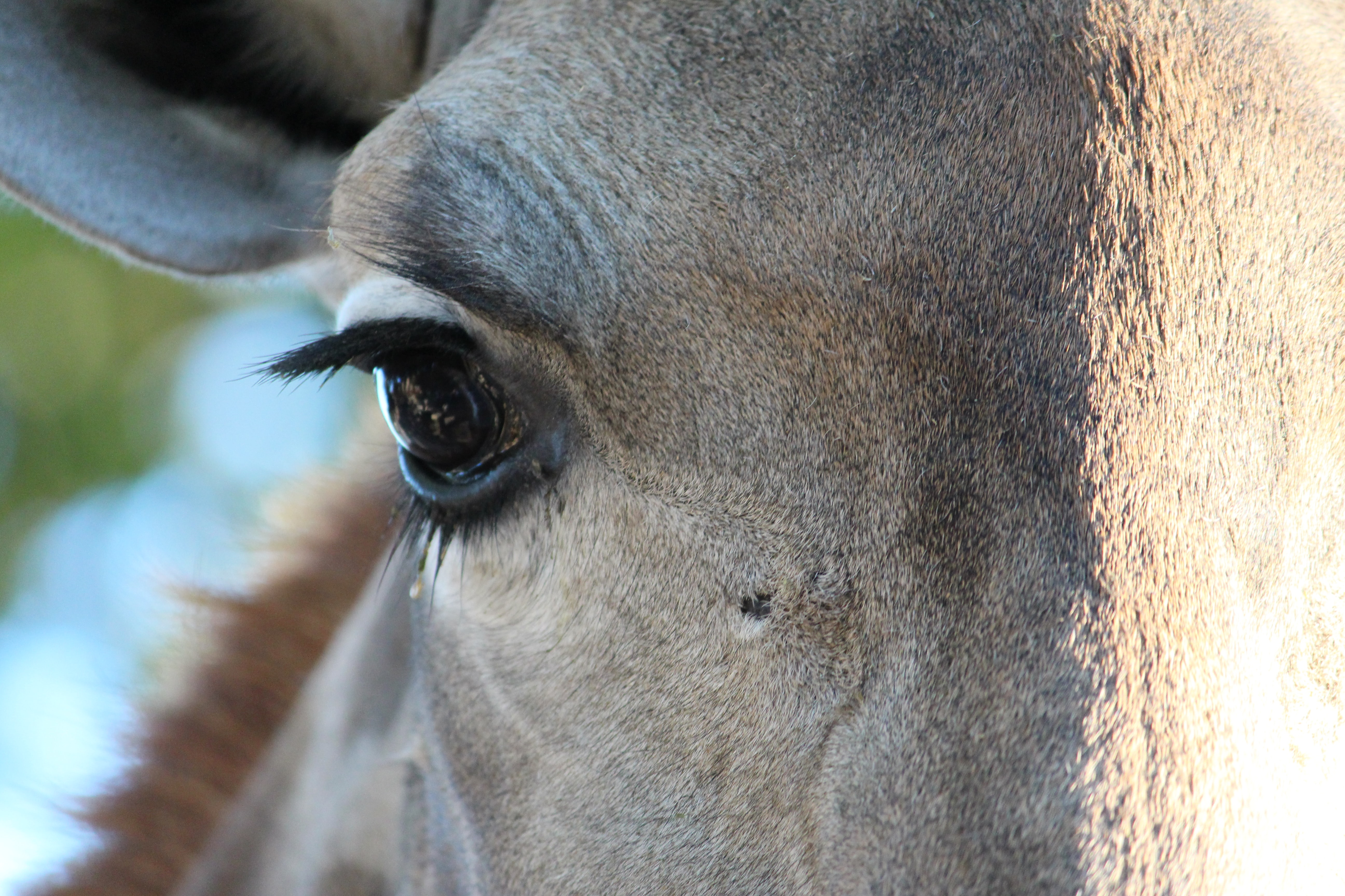 close up photo of horse right eye