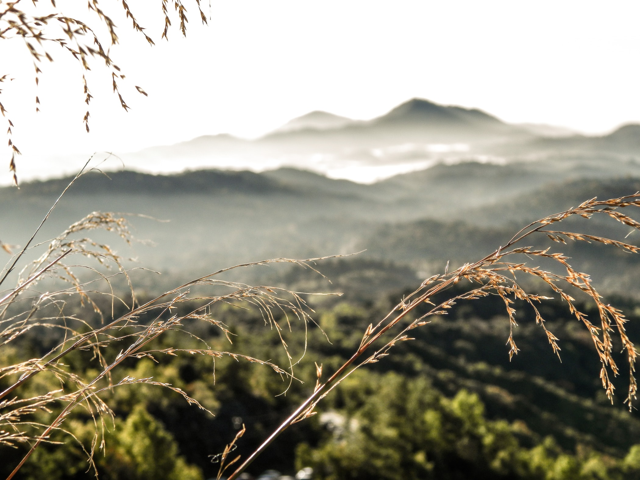 Dry blades of grass against a blurry mountain landscape in the background