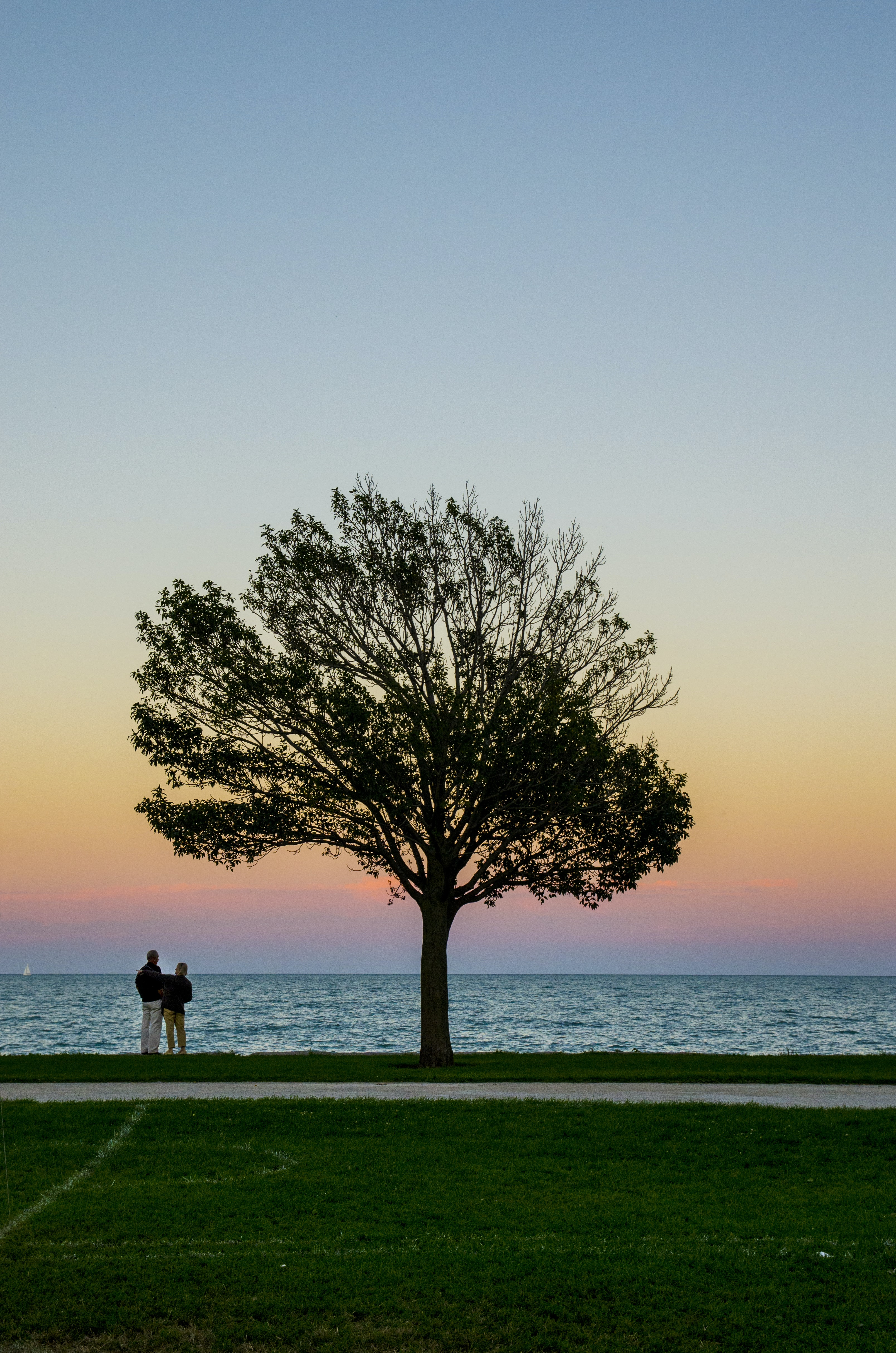 Tree silhouettes against the beach protects lovers who hold each other close