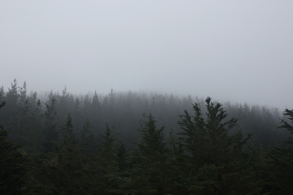 trees under cloudy sky