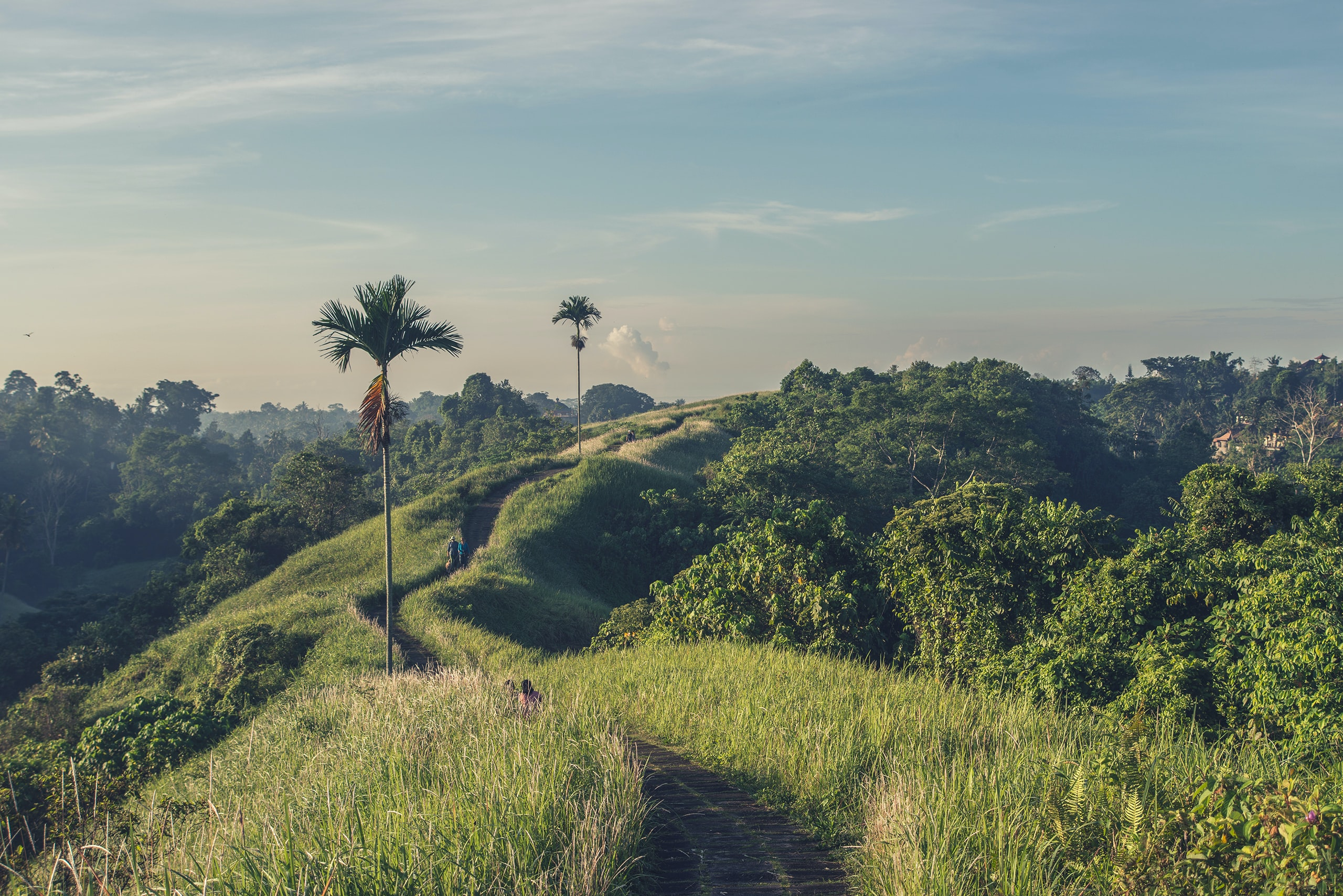 People on a dirt path leading up a hill with palms and leafy trees on the side