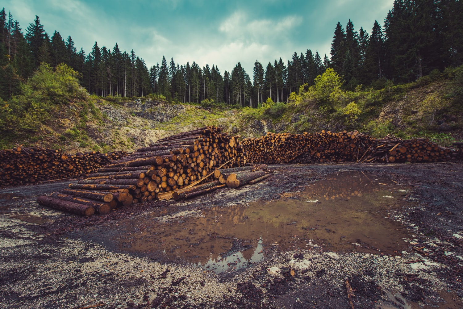 logs near the river