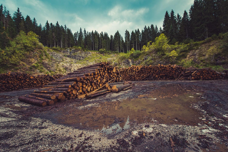 logs near the river