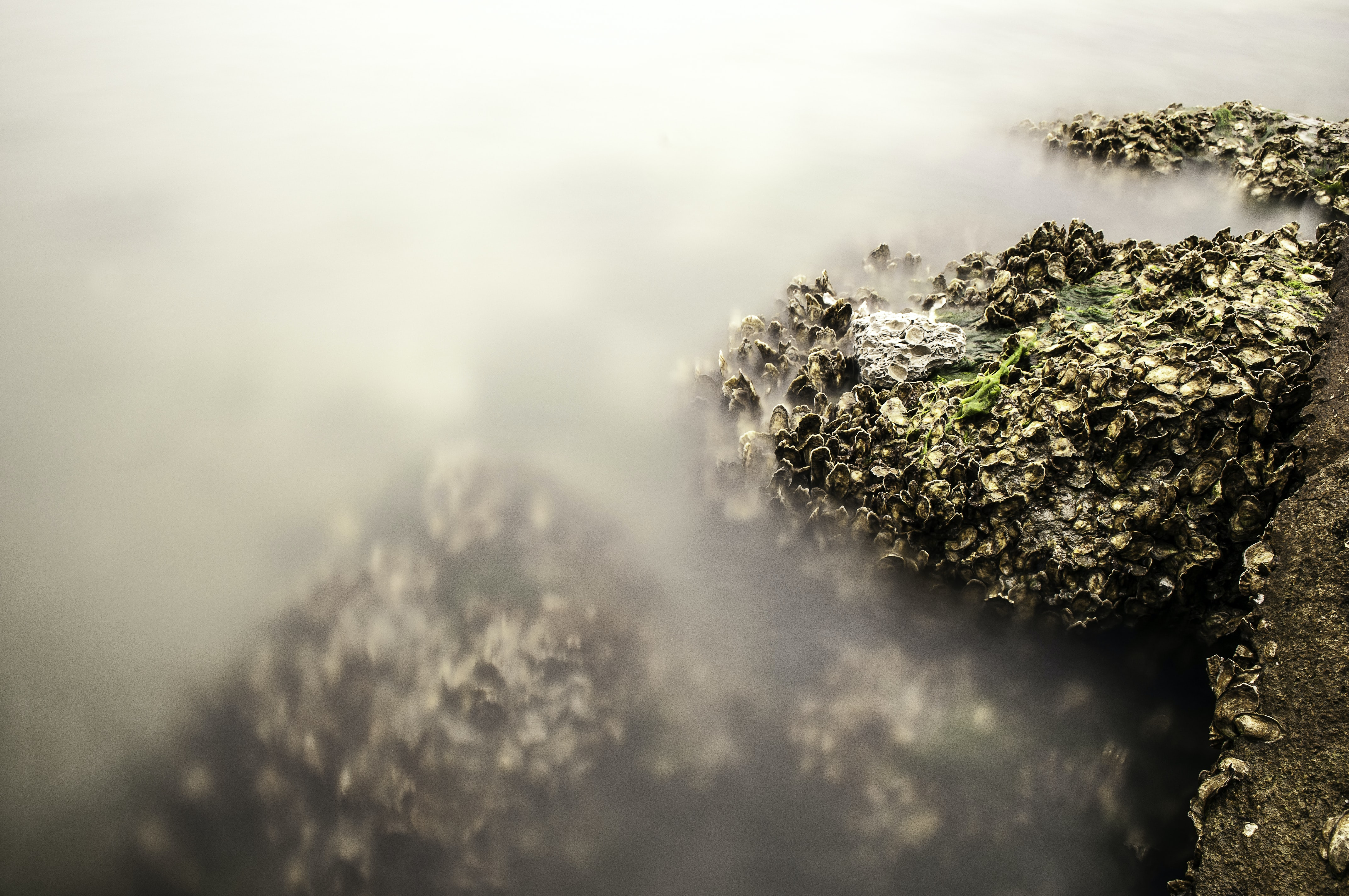 Misty beach with lichen, seaweed, shell and moss growing out of ocean rock at Atlantic beach