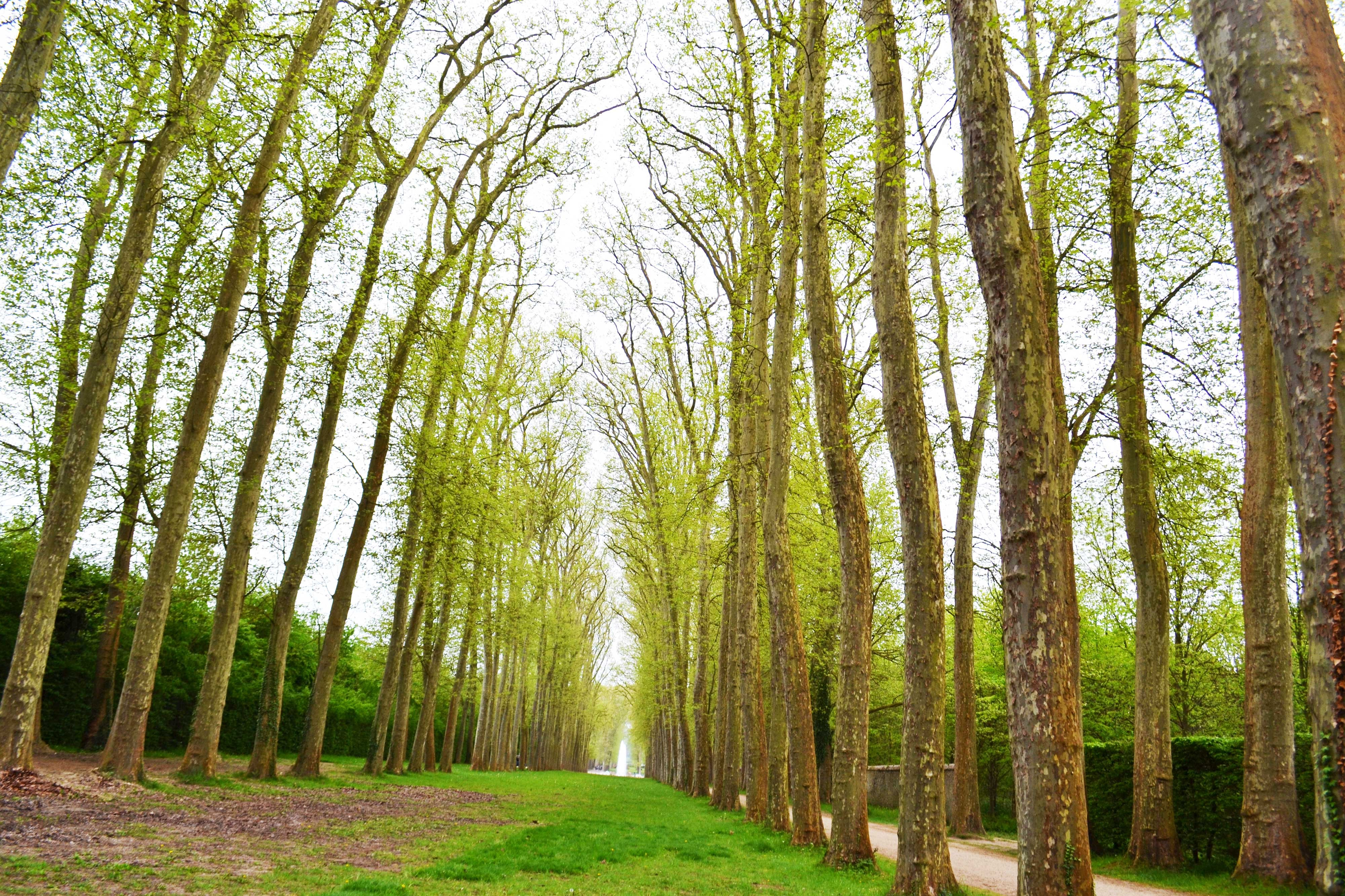 A path surrounded by trees in the gardens of Versailles