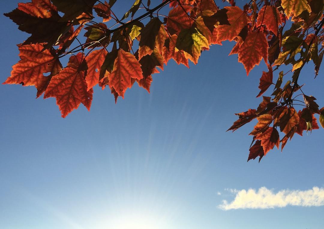 Autumn photo by aaron burden aaronburden on unsplash for Wallpaper happy home designer
