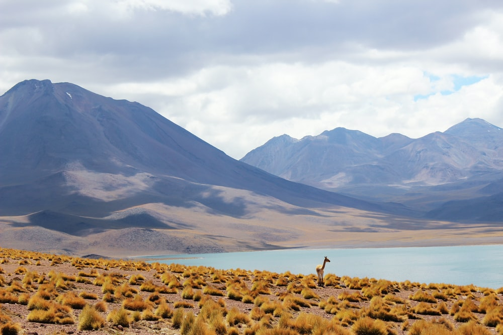 animal standing near body of water and mountains