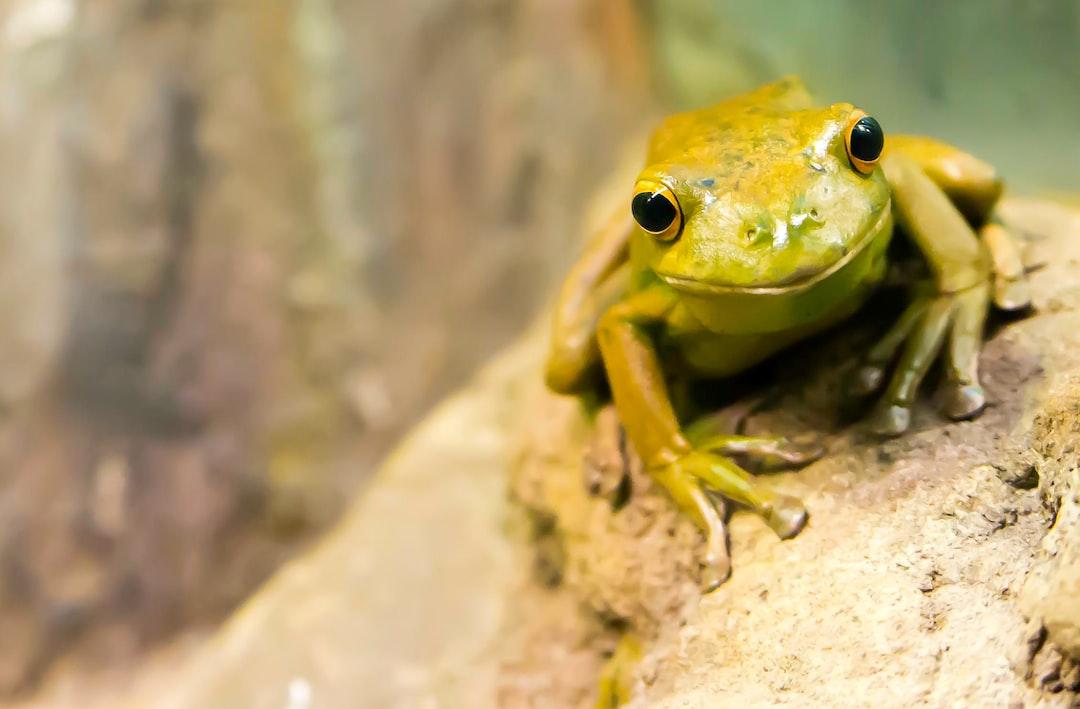 Amiable amphibian