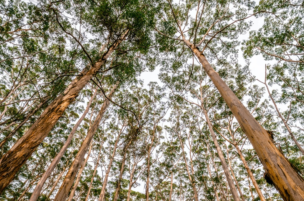 worm's eye view photography of trees