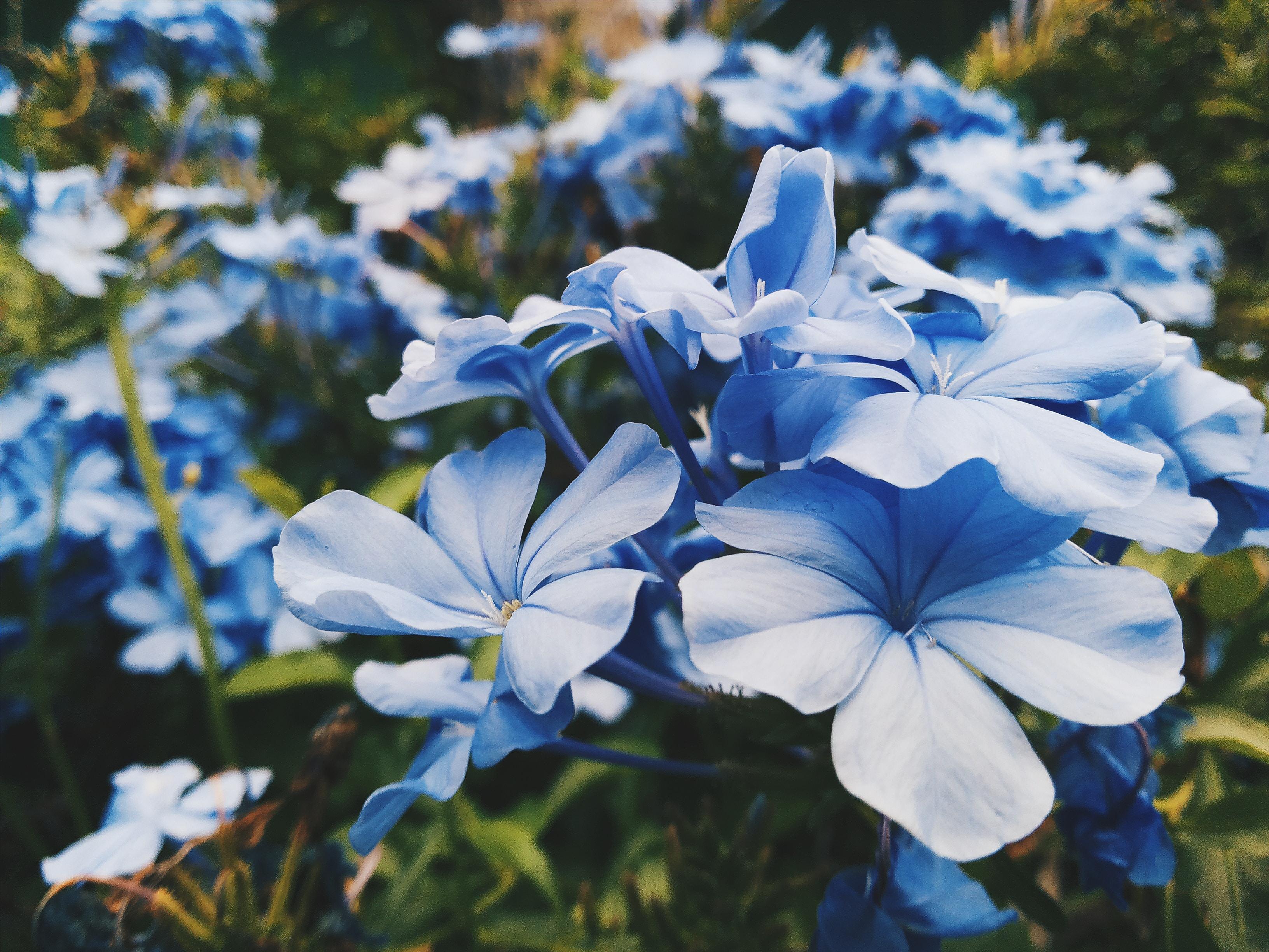 blue petaled flower lot focus photography