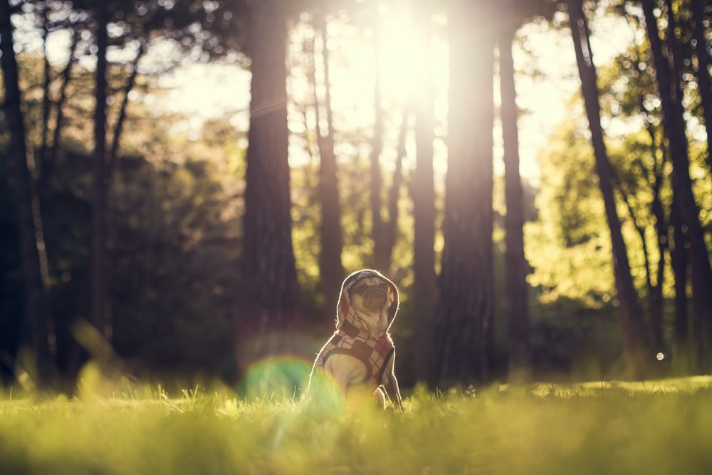 selective focus photography of dog sitting on grass behind trees at daytime